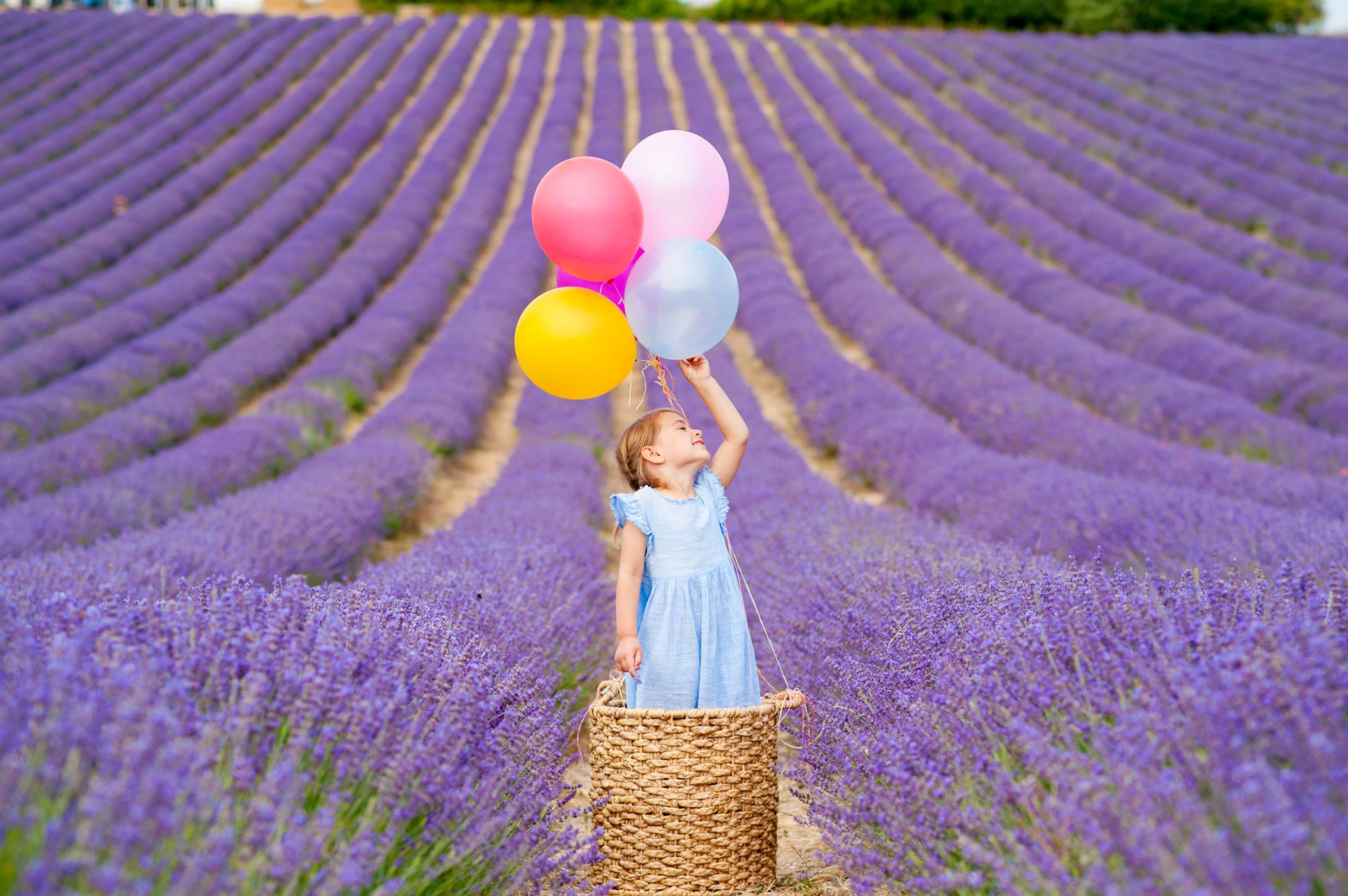 Family Shoots in Lavender